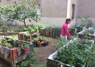 Jardinage et bricolage au jardin partagé Rosa-Rosette